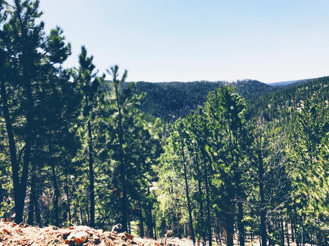 nature-treescape